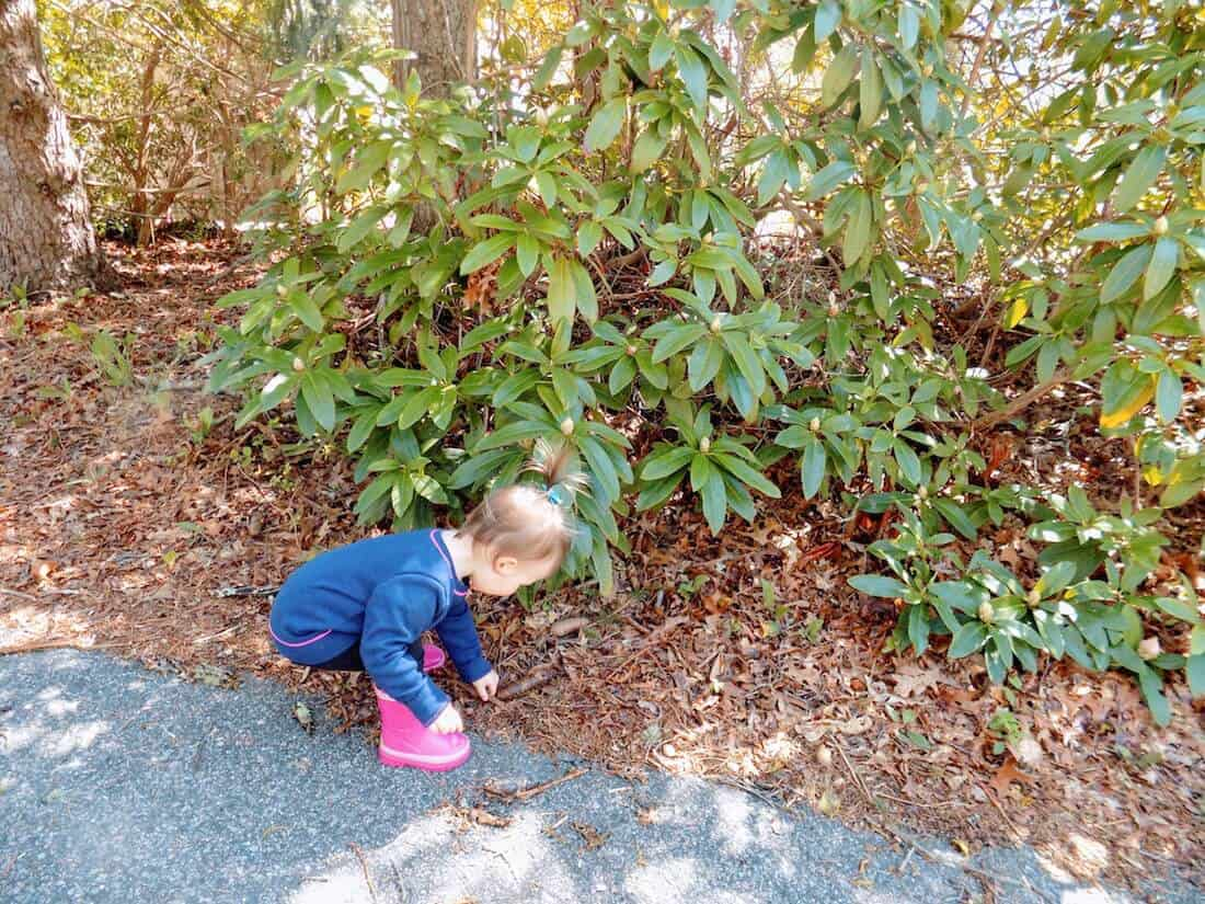 Little girl picks up leaves off paved trail.