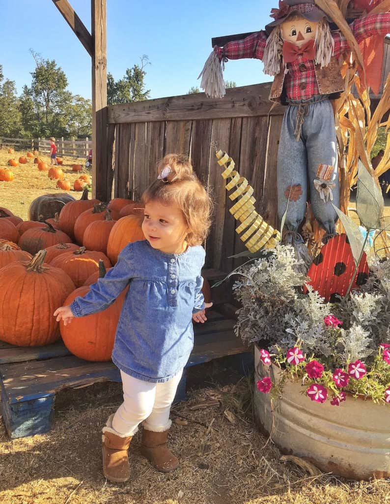Toddler girl plays at pumpkin patch to celebrate Halloween.