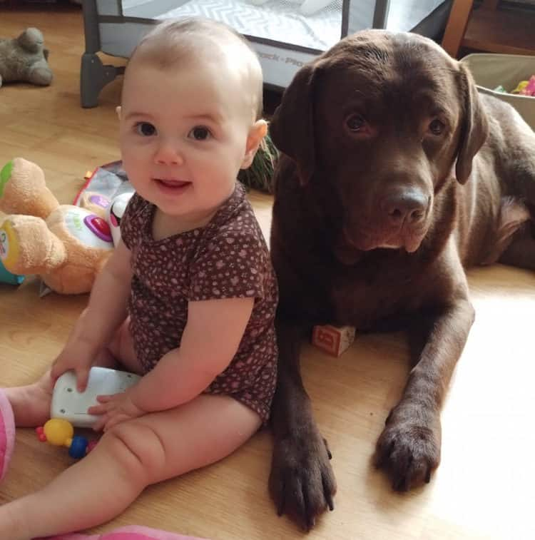 Baby girl sits next to dog.