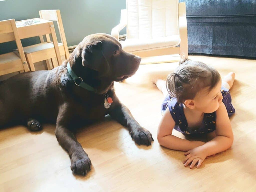 Little girl lays on floor with pet dog.