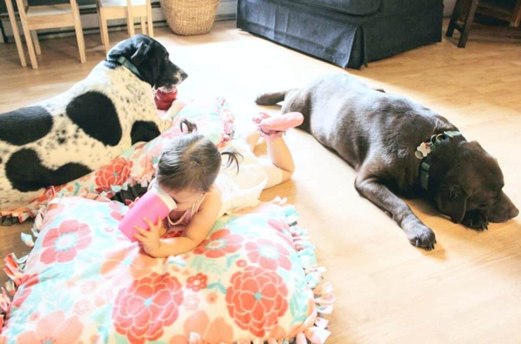 Dogs lay next to little girl on floor.