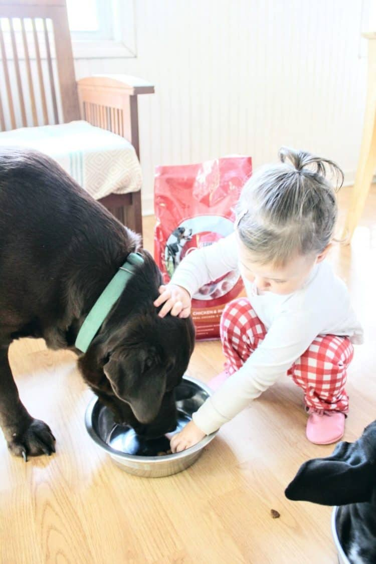 Little girl gives water to dog in dog bowl.