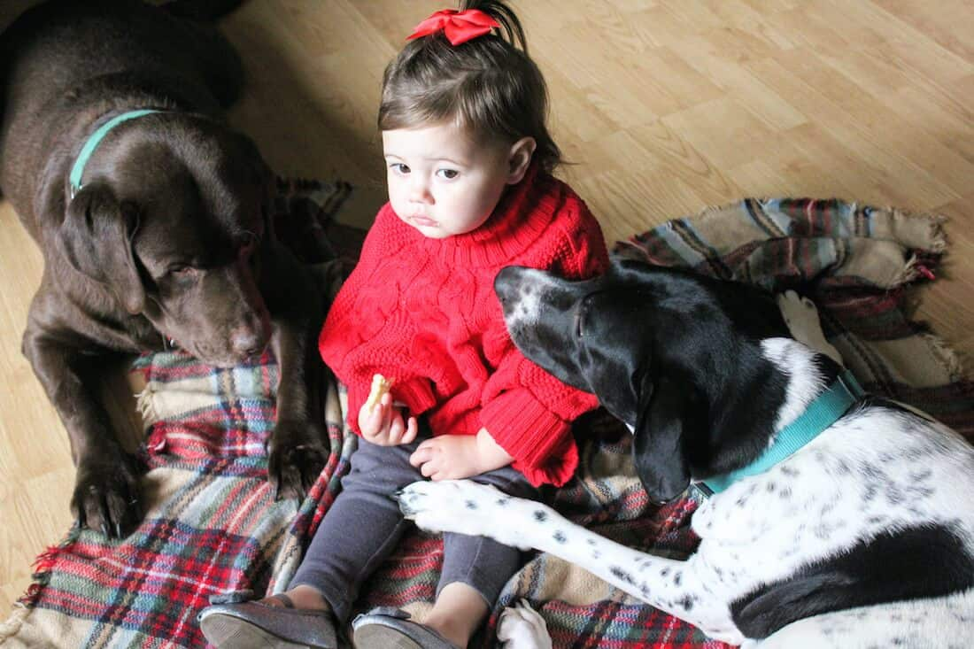 Toddler girl plays with dogs on floor.