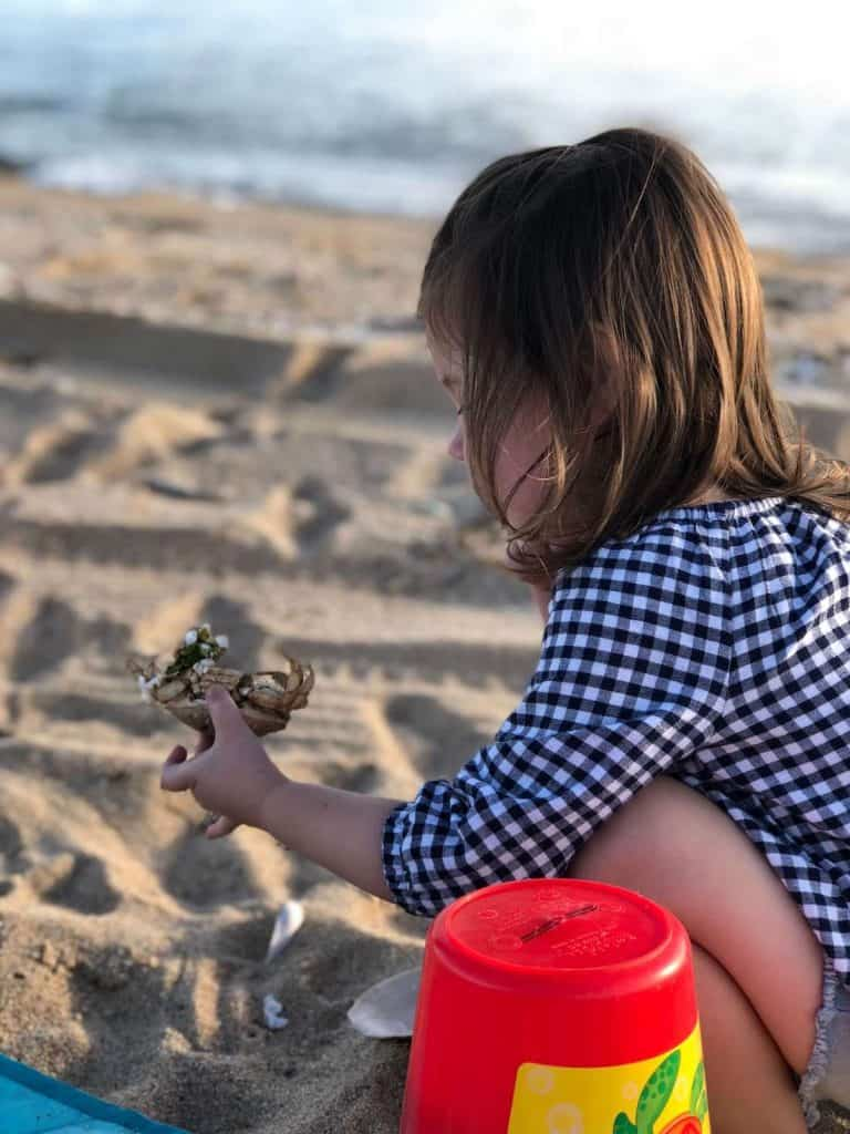 Little girl plays with crab on beach in MA.