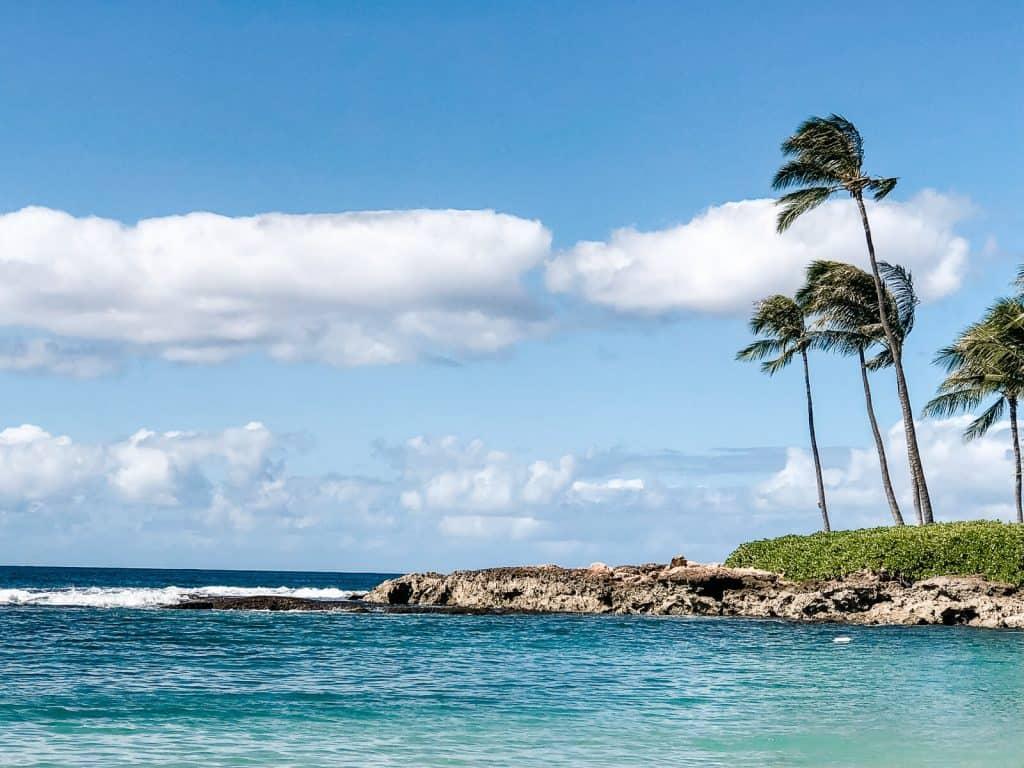 Oahu beach with palm trees.