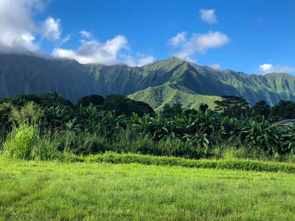 Lush North Shore Oahu mountain view.