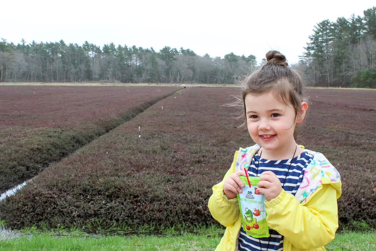 Girl at cranberry bog with Ocean Spray Growing Goodness juice drink
