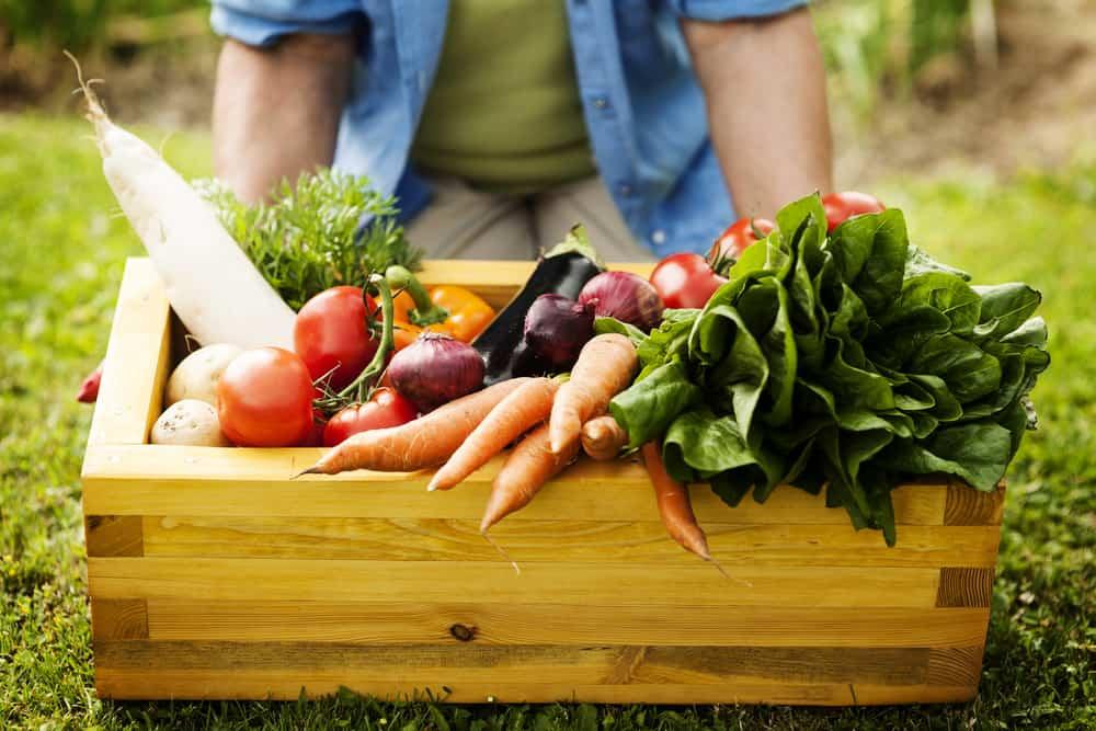 box of harvested vegetables from garden